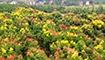金秋好风景:湖南各地层林尽染 色彩斑斓