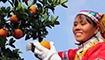 中国崀山第五届脐橙文化旅游节11月下旬开幕
