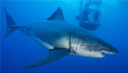 大长腿姐妹花入海观鲨坠落深海